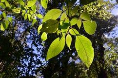 Lames de vert dans la forêt Photo stock