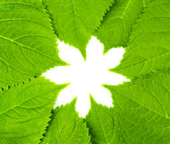 Lames de vert dans la forme de fleur Photos libres de droits