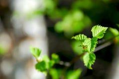 Lames de vert de source Image stock