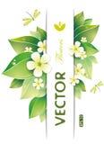 Lames de vert et fleurs de jasmin Images stock