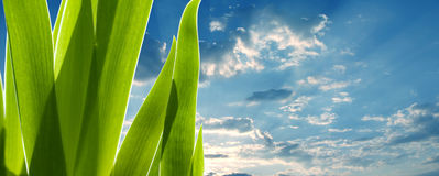 Lames de vert et le ciel photos stock