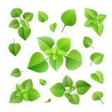 lames de vert réglées Photos stock