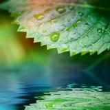 Lames de vert reflétées en plan rapproché de l'eau Photographie stock libre de droits