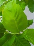 Lames de vert sur l'arbre Photos libres de droits