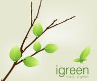 Lames de vert sur le branchement illustration de vecteur