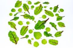 Lames de vert sur le fond blanc Photo stock