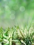 Lames de vert sur le fond clair de bokeh Image libre de droits