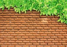 Lames de vert sur le mur de briques Photo libre de droits