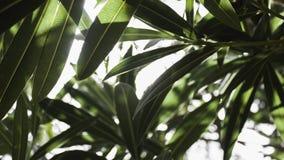 lames de vert photos libres de droits