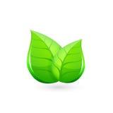 lames de vert Vecteur 10 ENV Photos stock