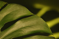 Lames des centrales tropicales Se refléter de monstres d'ombre Image libre de droits