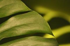 Lames des centrales tropicales Se refléter de monstres d'ombre Photographie stock