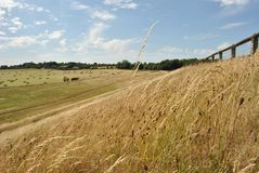 Lames du pré britannique, parc de pays de Brixworth Photographie stock libre de droits