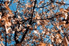 Lames en automne Photo libre de droits