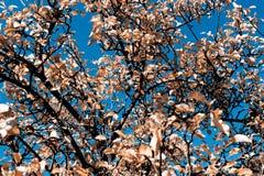 Lames en automne Photo stock