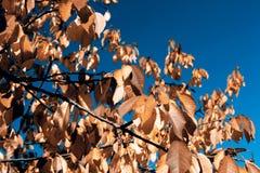 Lames en automne Image stock