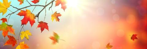 Lames en baisse en automne images stock