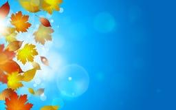 Lames en baisse d'automne Image libre de droits