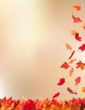 Lames en baisse d'automne Photo stock