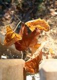 Lames en baisse en automne Photographie stock libre de droits