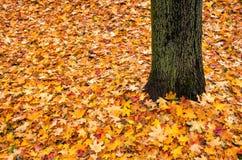 Lames et arbre d'automne Photo libre de droits