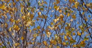 Lames et arbres d'automne banque de vidéos