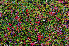 Lames et Berris dans des couleurs d'automne photo stock