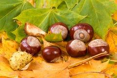Lames et châtaignes d'automne colorées Images libres de droits
