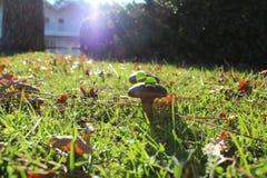 Lames et champignons de couche d'automne photo libre de droits