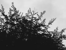 Lames et ciel Photographie stock libre de droits