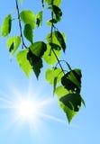 Lames et ciel de vert photo libre de droits