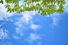 Lames et ciel de vert photographie stock libre de droits