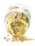 Lames et fleurs de limette Photos stock