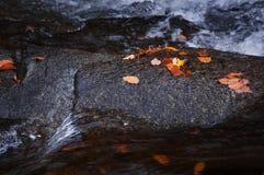 Lames et flot automnaux rouges Photographie stock libre de droits