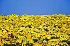 Lames et fond verts et jaunes de ciel image stock