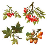 Lames et fruits d'automne de ramassage Photo stock