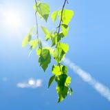 Lames et soleil de vert image stock