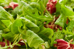 Lames fraîches de salade Image libre de droits