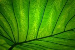 Lames fraîches de vert Photo libre de droits