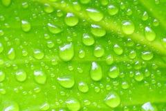 Lames fraîches de vert Images stock