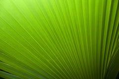 Lames fraîches de vert Images libres de droits
