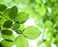 Lames fraîches de vert Image libre de droits