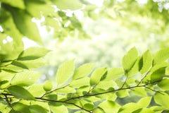 Lames fraîches de vert Photographie stock