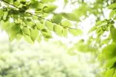 Lames fraîches de vert Photographie stock libre de droits