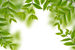 Lames fraîches de vert de source Photographie stock
