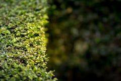 Lames fraîches de vert Fond vert avec des feuilles Image stock