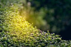 Lames fraîches de vert Fond vert avec des feuilles Images stock