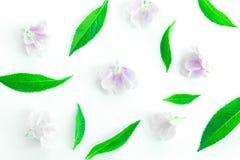 Lames fraîches de vert sur le fond blanc Image stock