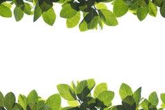 Lames fraîches de vert sur le fond blanc Photos libres de droits