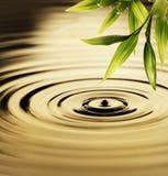 lames fraîches en bambou Image stock